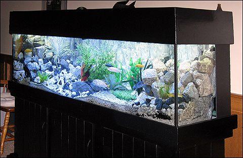 Aquarium Caves And Ornaments For Sale At Aquariumfish Net Aquarium Aquarium Decorations Fish Tank