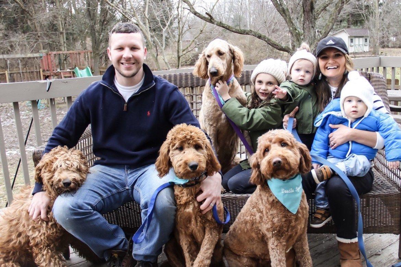 Columbus Ohio Goldendoodle Puppies Goldendoodle Puppy