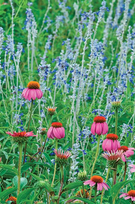 Great Spots To See Hill Country Wildflowers This Spring Wild Flowers Natural Wonders Cool Places To Visit