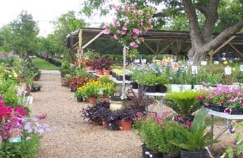 Local Resource Countryside Nursery Retail Garden Center In Austin Select Texas Native And Adapted Plants Shrubs Trees From Our Large