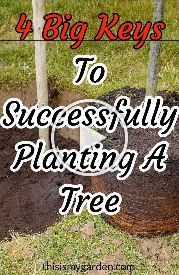 The 4 Keys to Successfully Planting A Tree See what it takes to make your trees thrive