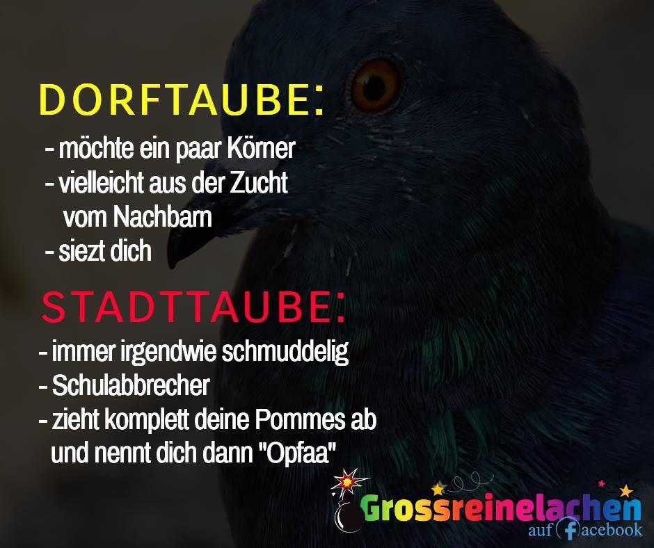 Pin Von Lena Hartmann Auf Spruche Lustige Spruche Lustige Spruche Bilder Witzige Spruche