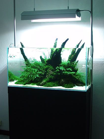 90*45*45   Aquascaping   Aquatic Plant Central