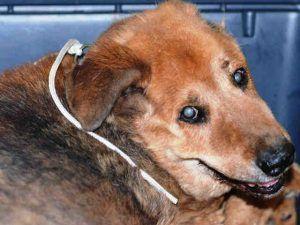 Jordon Aka Jacob A1123220 Cat Help Dog Adoption Animal Shelter