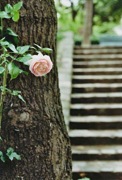 صور ورود حب جميلة جدا ومعبرة زهور متنوعة Flowers My Secret Garden Bloom