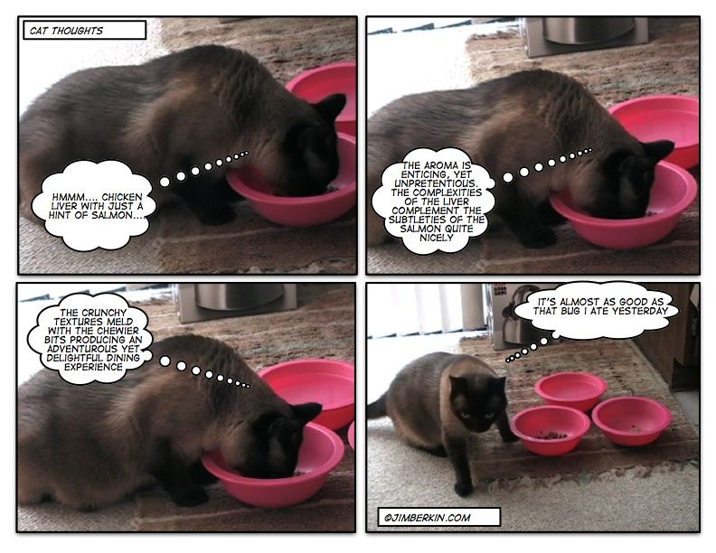 page_5.jpg 792×612 pixels Dog bowls, Kittens, Aroma