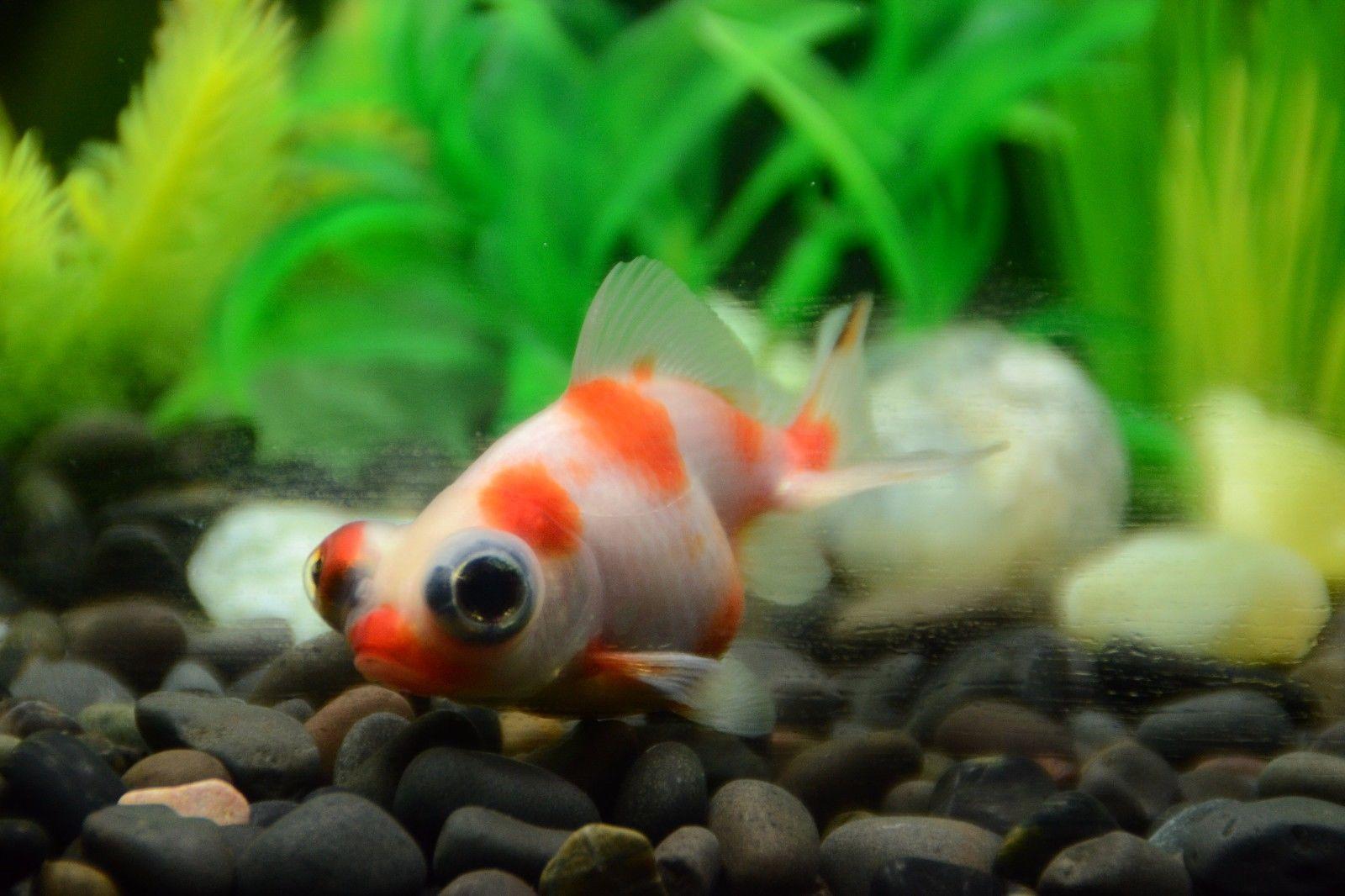 Aquarium Fish For Cold Water Aquarium Fish Fish Cool Fish