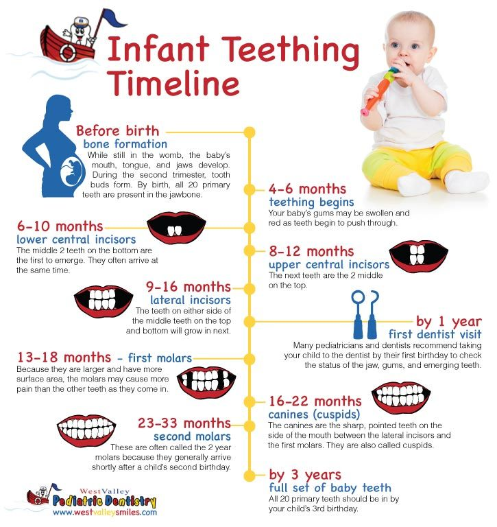 Teething timeline Baby Pinterest Timeline, Babies and Infant - baby teeth chart