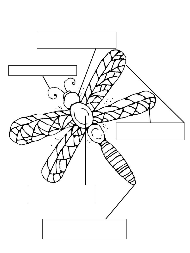 Insect Labels With Images
