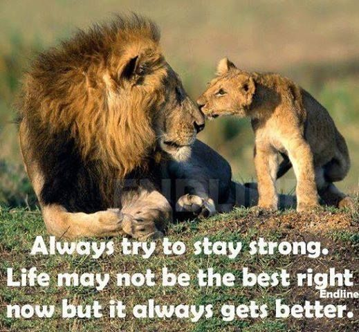 Try To Be Strong Life Quotes Quotes Animals Quote Life Quote