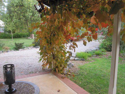 Amy's 1 verandah in Autumn. Looks so peaceful.