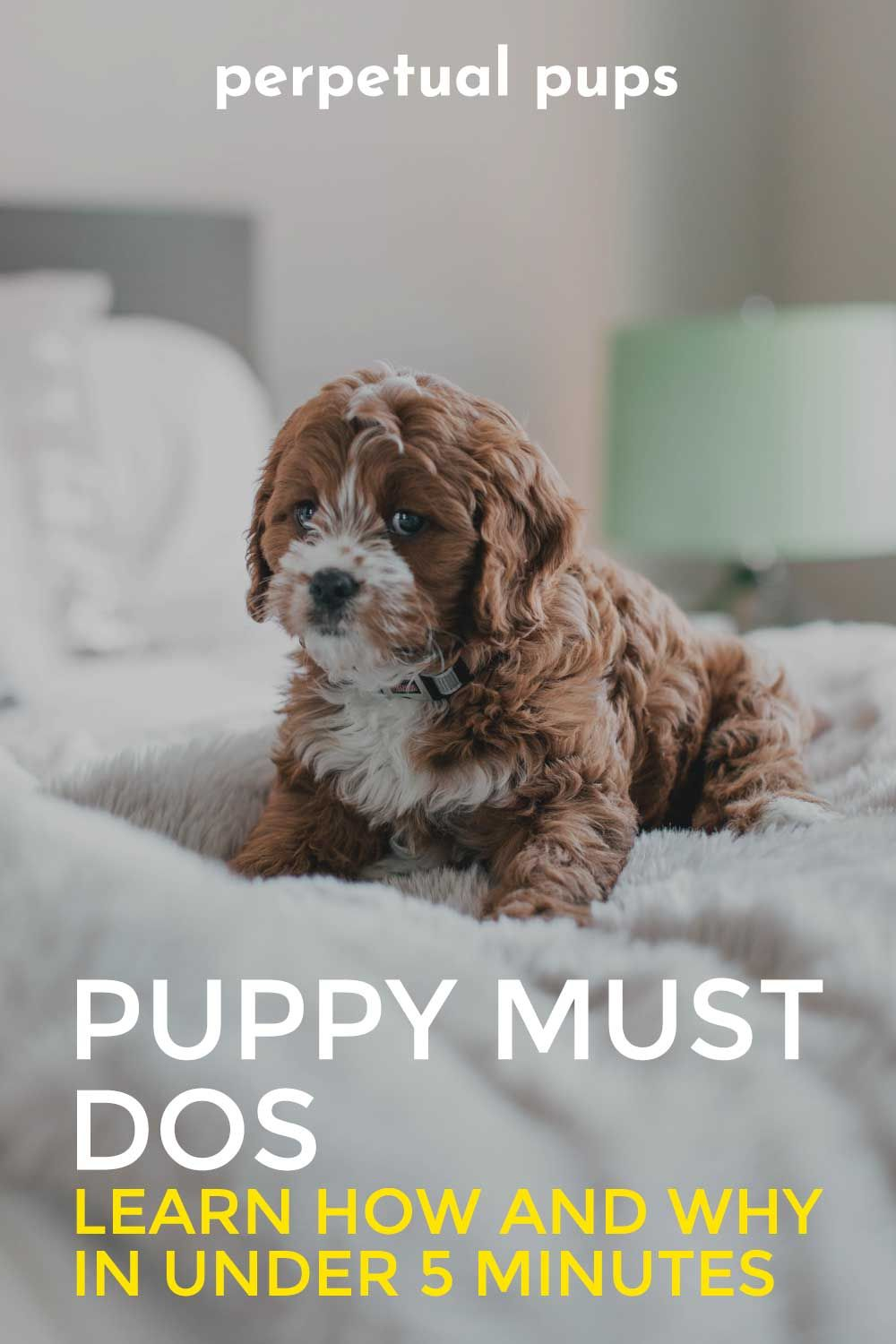 Puppy Must Dos In 2020 Puppies All About Puppies Getting A Puppy