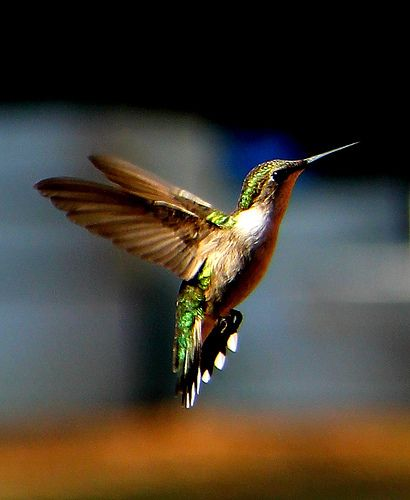 Google\u0027s Hummingbird How To Write an Internet #Marketing Resume