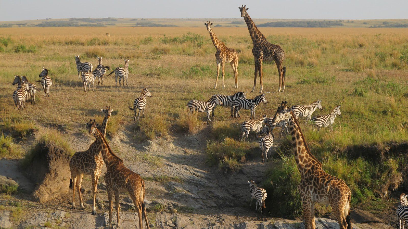 WE LOVE AFRICA| By: ANIMALS OF AFRICA | ***Amazing Animals ...