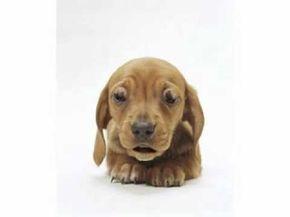 Puppy Dog Birthday Video Birthday Songs Youtube Birthdays
