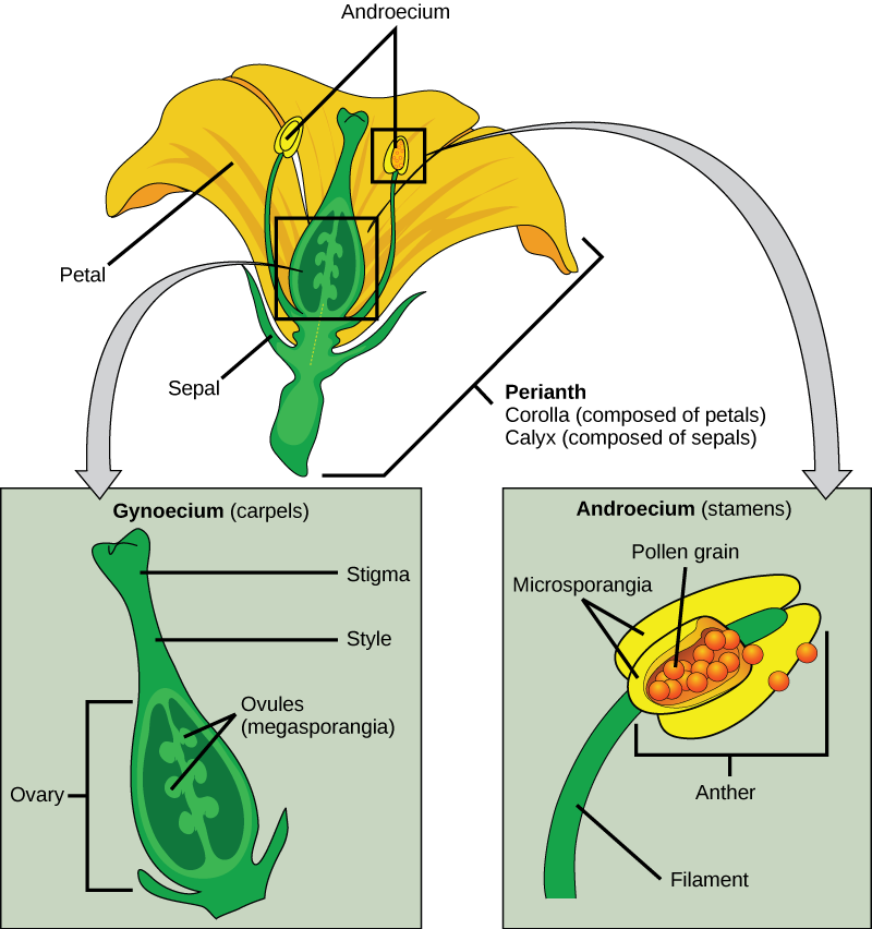 Illustration shows parts of a flower, which is called the
