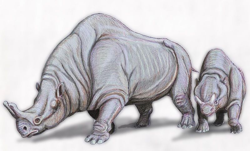 Megacerops, a primitive relative of rhinos and elephants. Massive and dull-witted, and very well suited for a future idea.