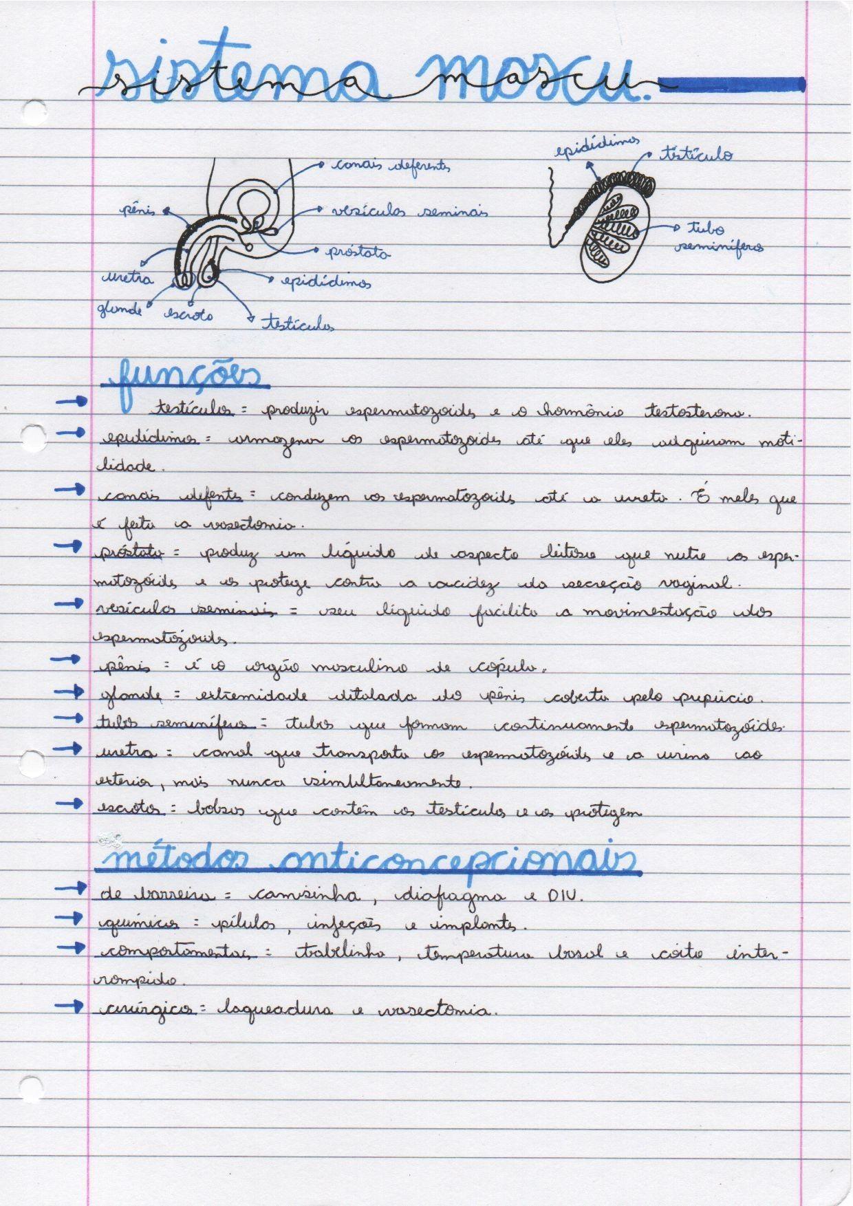 Biologia Sistema Reprodutor Masculino Ideias Da Escola