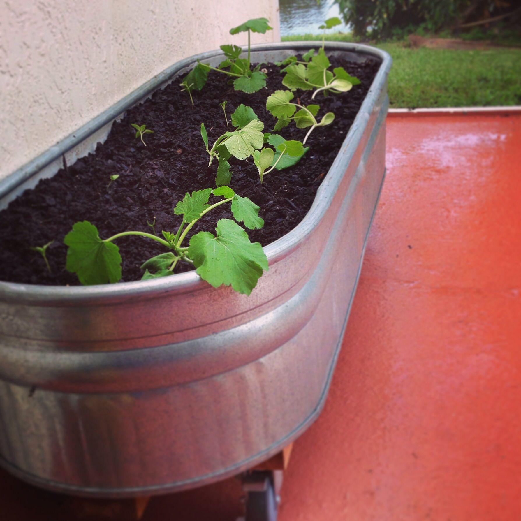 New Herb Garden On Wheels