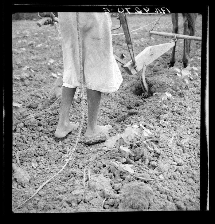 8. An Alabama plow girl, Eutaw 1936. Rare photos