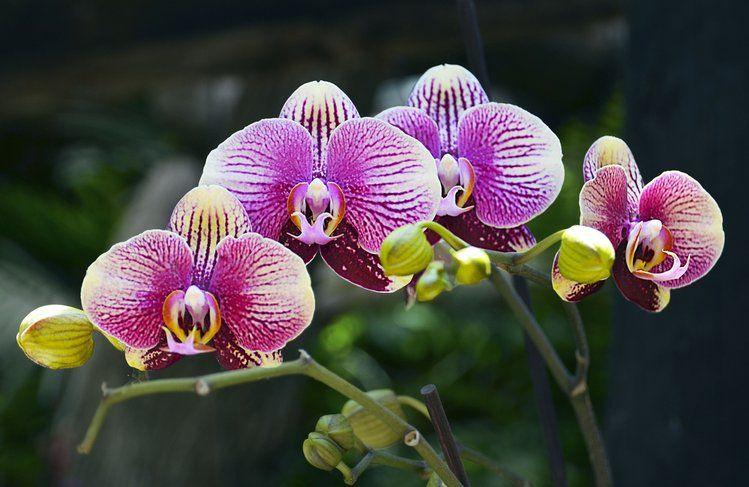 Jezeli Masz W Domu Storczyki To Wykorzystaj Ten Trik House Plants Tropical Plants Orchids