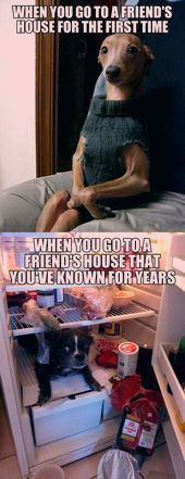 Friend's house feelings #funny #dogs #memes  Friend's house feelings #funny #dogs #memes    This image has get 1 repins.    Author: IAmGroot3000 #Dogs #feelings #friends #Funny #House #Memes