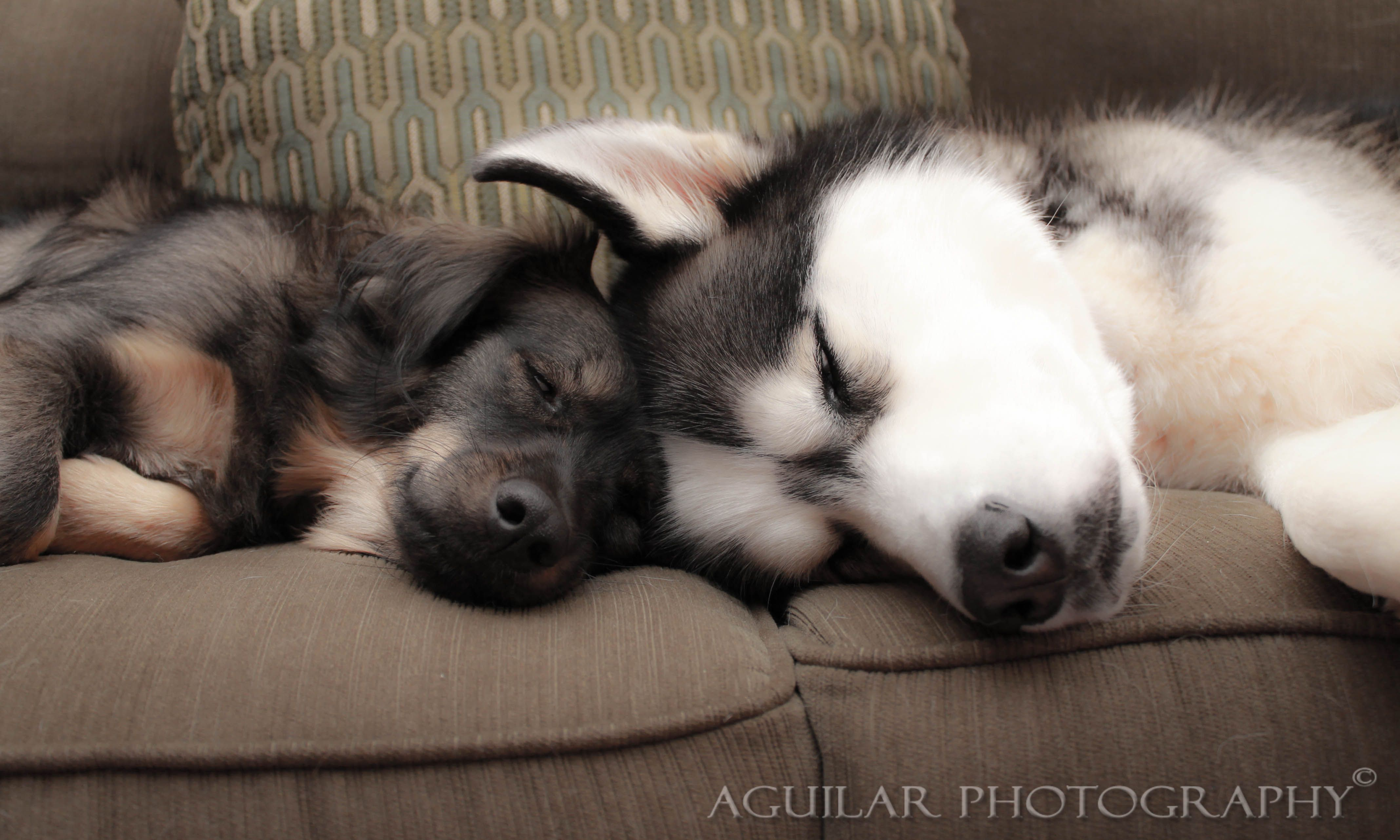 Sleepyheads - http://on.fb.me/aguilarphotography