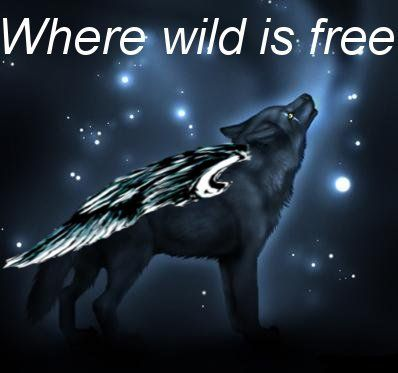 Black Wolf With Wings By Charmed549 On Deviantart Anime Wolf Wolf Colors Black Wolf
