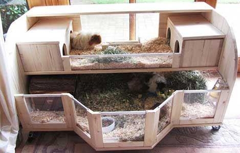 Make Your Own Guinea Pig Cage Guinea Piggies Diy Guinea Pig Cage