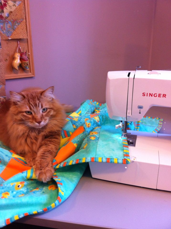 Cats are not good quilting assistants!