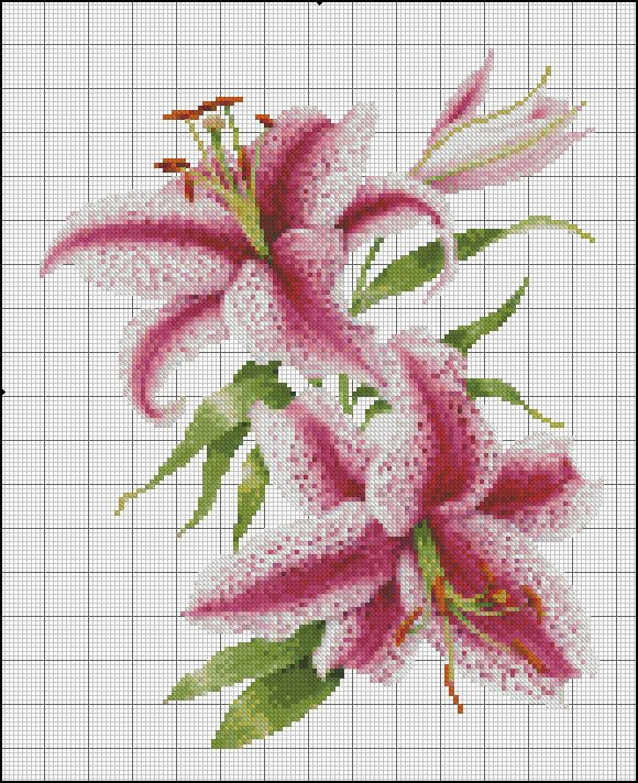lillium oriental | Punto de cruz Flores | Pinterest | Punto de cruz ...