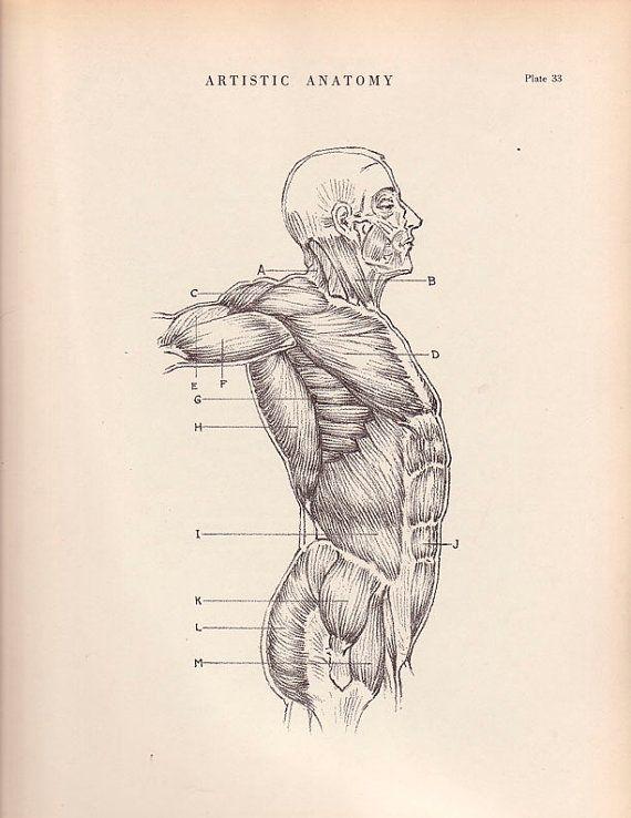 1941 Vintage Print Human Anatomy Illustration Wall by AgedPage ...