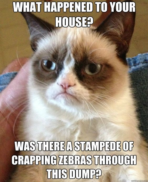 Grumpy Cat #cat #pets #cosplayclass #funny