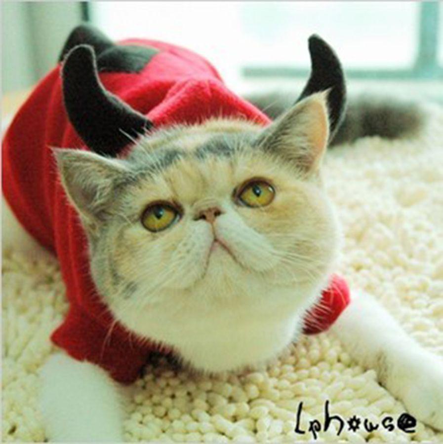 Cat Clothes Lion Mane For Cat Clothes Pet Costume Lion Mane Cat