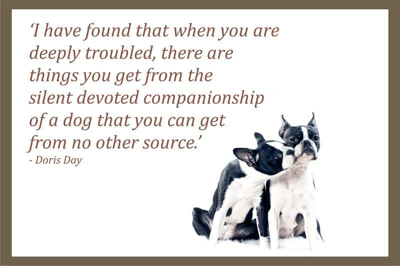 Quote From Doris Day Dog Quotes Pet Quotes Dog Animal Quotes