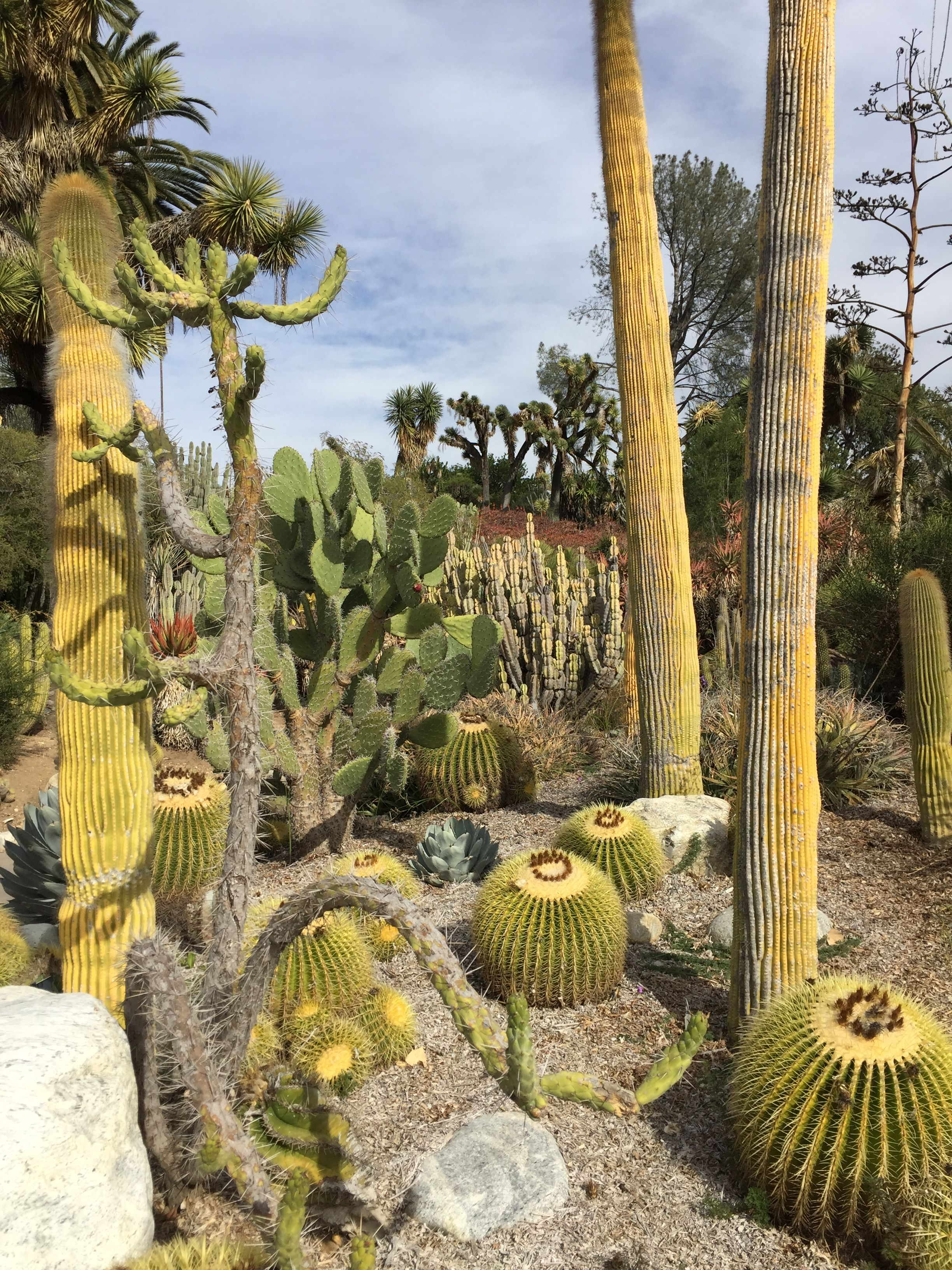 Cactus garden at Huntington Library and Gardens. San Marino, CA ...
