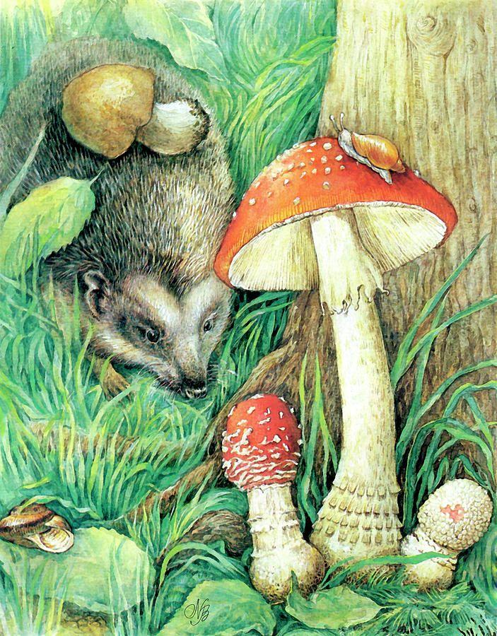 Детские картинки лес и грибы