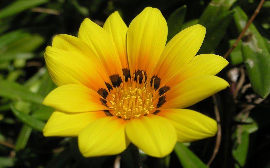 Toko Bunga Di Padang Florist Adalah Toko Bunga Padang Florist Di Padang Papan Bunga Di P Beautiful Flowers Pictures Flower Images Wallpapers Cute Flower Images Fantastic yellow flower hd wallpaper