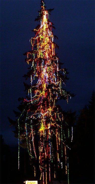 the worlds tallest lighted living christmas tree is located in blue river oregon with over 160 feet - Worlds Tallest Christmas Tree