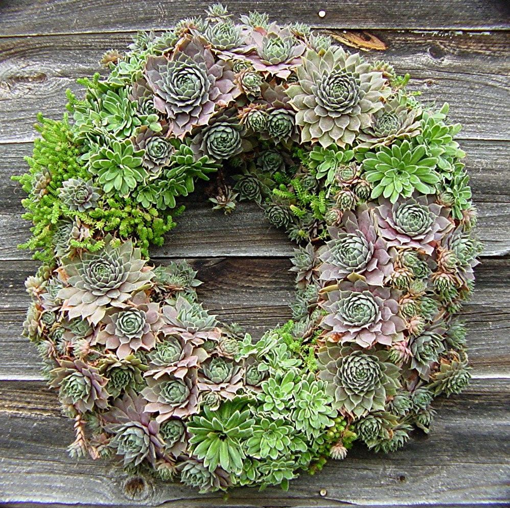 Moss-filled living wreaths planted with hardy succulents makes a great conversation piece!