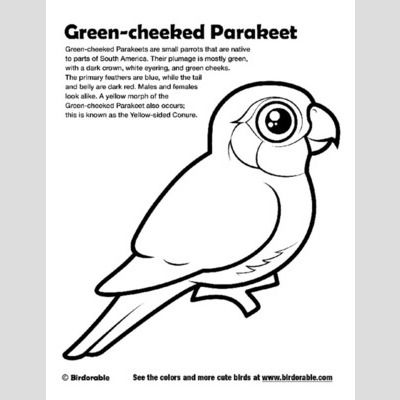 Green Cheeked Parakeet Coloring Page Sample Coloring Pages Bird