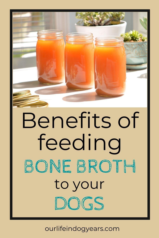 5 Reasons to Give Your Dog Bone Broth in 2020 Bone broth