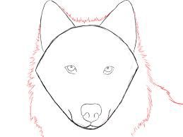 How To Draw A Wolf Face Google Search Wolves Pinterest Wolf