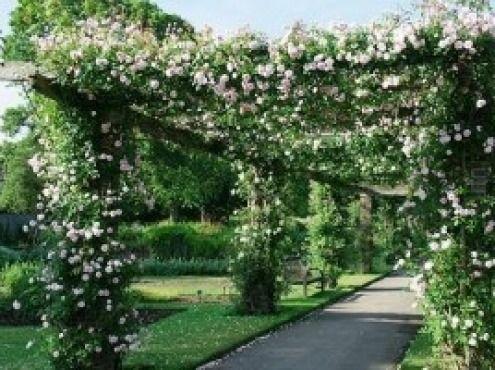 Plantas enredaderas con guia buscar con google jardin pinterest pergolas backyard and - Plantas trepadoras para pergolas ...
