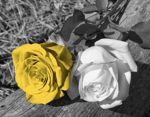 Black White Yellow Rose Flower Yellow Pop Of Color Yellow Gray