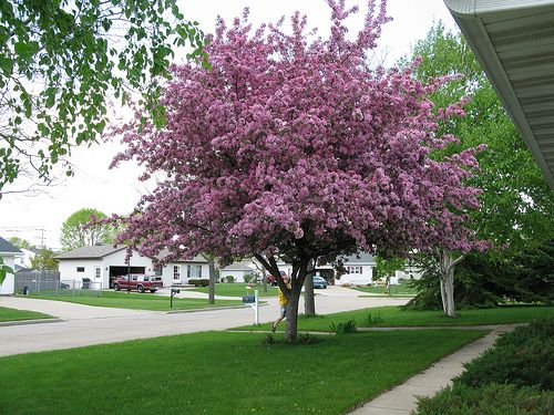Small Front Yard Tree Images