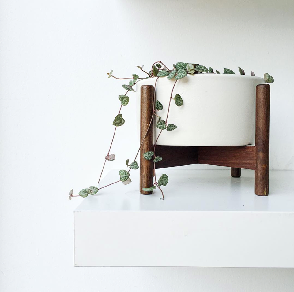 we are your only source for modernica casestudy planters in canada via design