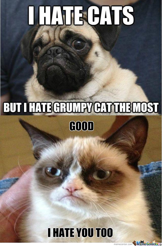 grumpy cat Google Search (With images) Grumpy cat meme