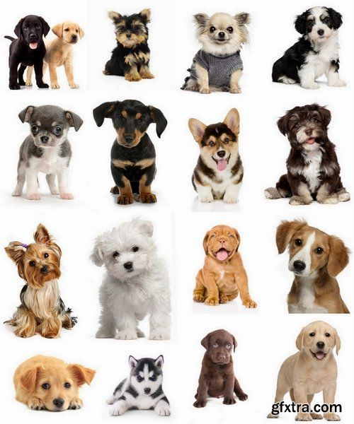Pictures Of Puppies Of Different Breeds Google Search Puppy