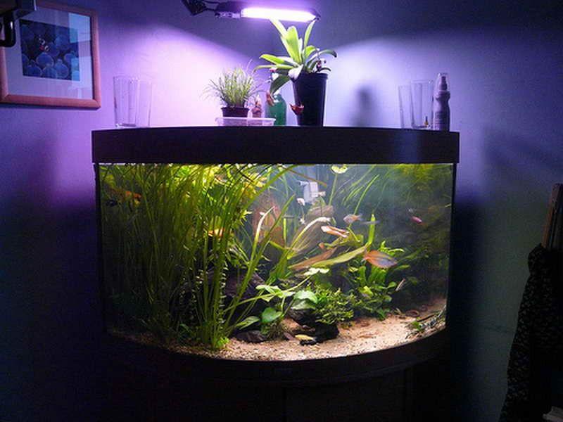 fish tank lighting ideas. Fish Tank Decor Ideas With Purple Glow ~ Http://monpts.com/ Lighting